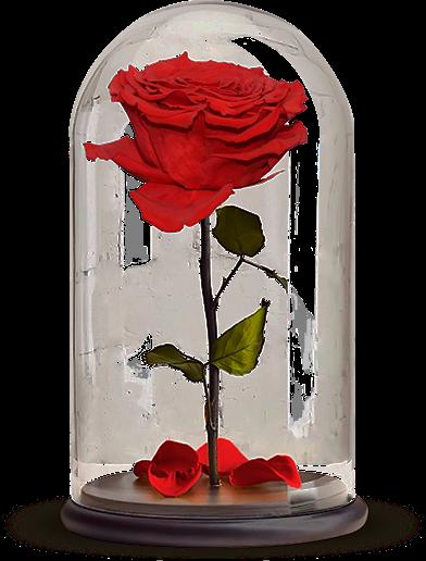 Что такое Роза в колбе?