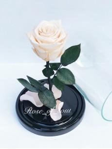 Белая мини-роза в колбе