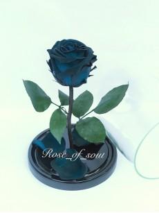 Бирюзово-синяя стандарт-роза в колбе