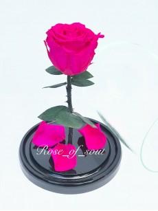 Фуксия мини-роза в колбе