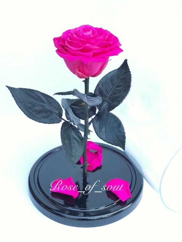 Фуксия премиум-роза в колбе