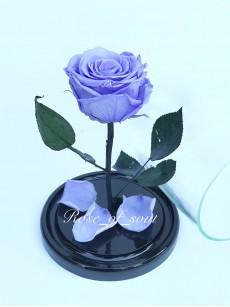 Лаванда мини-роза в колбе