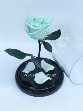 Мятная стандарт-роза в колбе