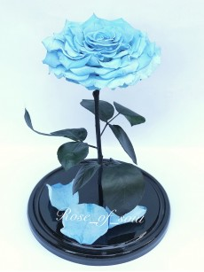 Небесно-голубая кинг-роза в колбе
