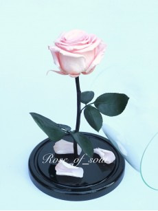 Нежно-розовая премиум-роза в колбе