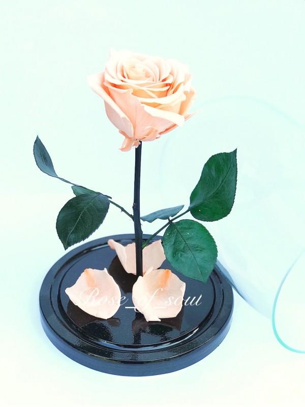 Персиковая премиум-роза в колбе