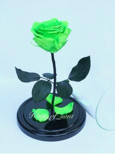 Салатовая премиум-роза в колбе