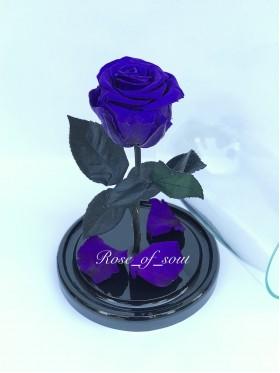Сине-фиолетовая стандарт-роза в колбе