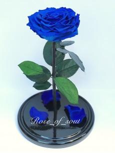 Синяя кинг-роза в колбе