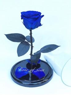 Синяя премиум-роза в колбе