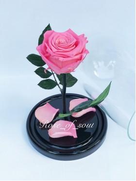 Ярко-розовая мини-роза в колбе
