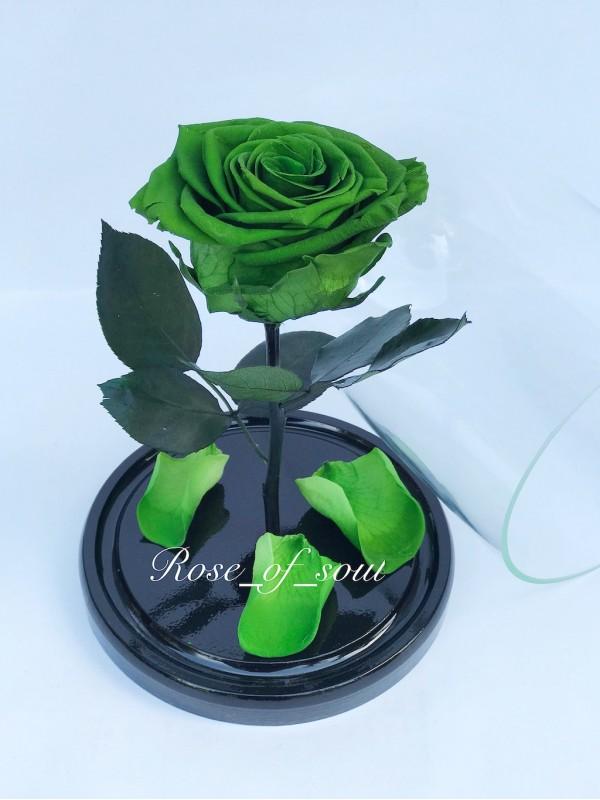 Зеленая мини-роза в колбе