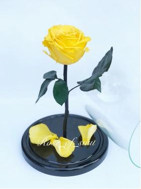 Желтая премиум-роза в колбе